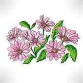 Daisywheels rose — Stock Photo