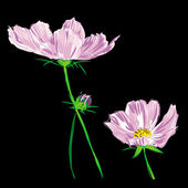 Flower cosmos bipinnatus raster — Stock Photo