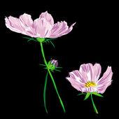 Flower cosmos bipinnatus raster — Stock Photo
