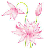 Flower lotus raster — Stock Photo