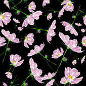 Flower pattern cosmos raster — Stock Photo