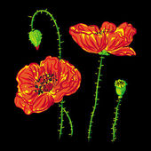 Flower poppy, anemone on black background raster — Stock Photo