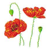 Flower poppy, anemone raster — Stock Photo