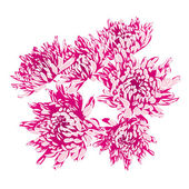 Rose asters raster — Stock Photo