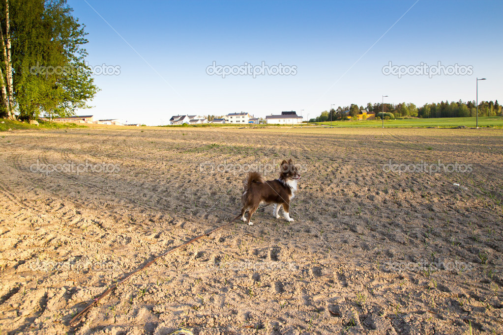 Ploughed field and dog — Stock Photo #10778383