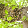 Savage bee hive — Stock Photo