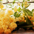 Vintage yellow roses, landscape — Stock Photo