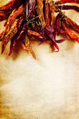 Dried peppers frame — Stock Photo