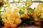 Vintage yellow roses, landscape — Stock Photo
