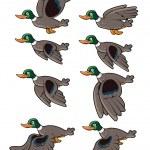 animation d'oiseau volant — Vecteur