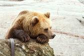 Sad bear — Stock Photo