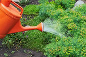 Watering Garden Natural Flowers — Stock Photo