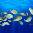 Tropical Fish — Stock Photo #10754549