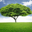 Beautiful big tree — Stock Photo #10782532