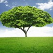 Beautiful big tree — Stockfoto #10782532
