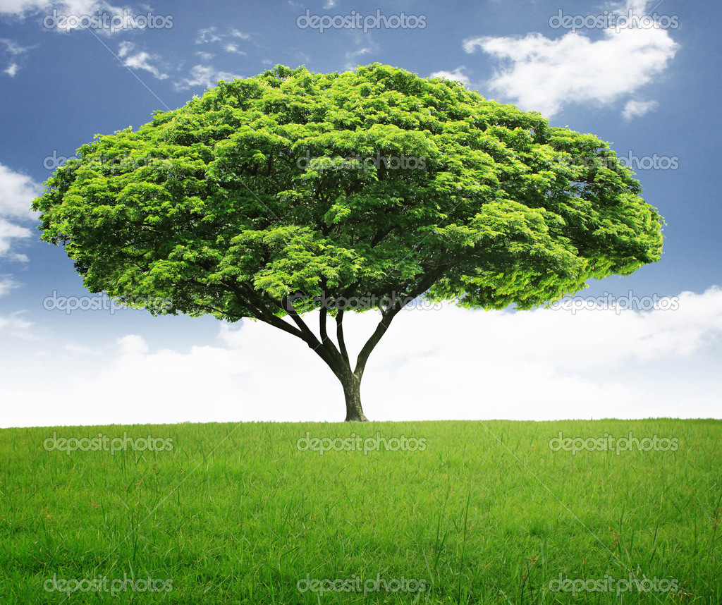 Tree — Stock Photo #10782532