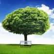 Beautiful big tree — Stock Photo #10909732