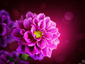 Beautiful Floral fiower — Stock Photo