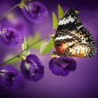 Beautiful Floral and butterflies — Stock Photo