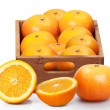 Orange  on white background — 图库照片