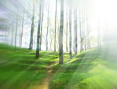 Forest trees — Stock Photo