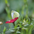 The butterfly sits on a flower — Stock Photo