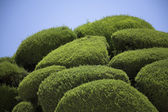 Uncommon shapes of mediterranean trees — Stock Photo