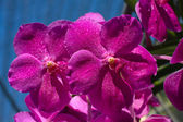 A close-up of a orchid — Stock Photo