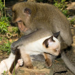 Monkey and domestic cat — Stock Photo #10798074