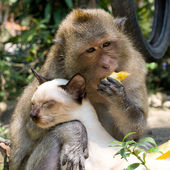Monkey and domestic cat — Stockfoto