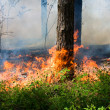 Forest fire — Stock Photo #10856001