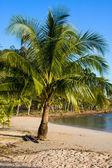 Playa exótica — Foto de Stock