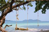 Swing on the tree — Stock Photo