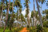 Ground road in jungle , Thailand . — ストック写真