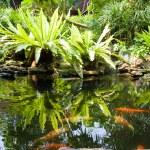 Tropical Zen Garden — Stock Photo #10926084
