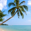 Beautiful palm tree over white sand beach — Stock Photo #10929848