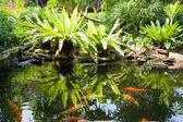 Tropical Zen Garden — Stock Photo