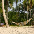 Beach with palm tree and hammock — Stock Photo