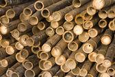Canne di bambù — Foto Stock