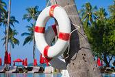 Lifebuoy Hanging On A Palm Tree — Stock Photo