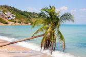 Palm trees on the sea — Stock Photo