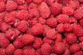 Raspberry — Stockfoto