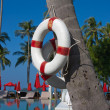 Lifebuoy hanging on a palm tree — 图库照片