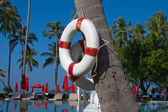 Lifebuoy hanging on a palm tree — Stok fotoğraf