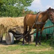 Stock Photo: Horse with cart loaded hay