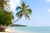 Beautiful palm tree over white sand beach — Stock Photo