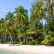 Coconut palm trees on summer beach — Stock Photo