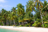 Coconut palm trees on summer beach — Stock Photo