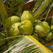 Coconuts on palm tree — Stock Photo #11407466