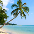 Beautiful palm tree over white sand beach — Stock Photo #11506807